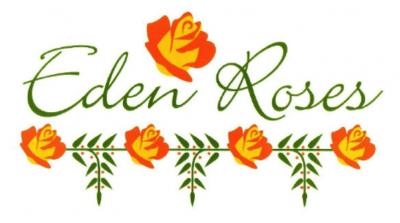 Плантации роз Эквадора eden roses