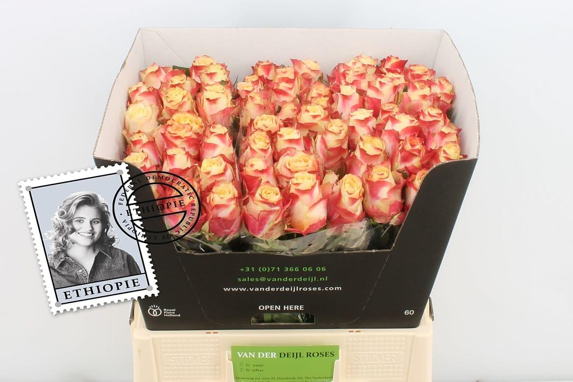 Ашан каталог, заказ доставка цветов из голландии в казахстане