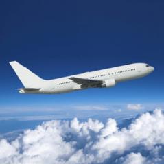Цветы оптом из Эквадора и Голландии самолетом