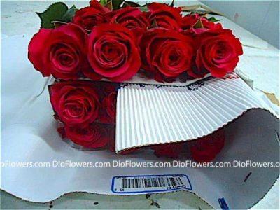 Прайс листы на цветы казахстана — 8