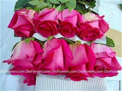 Уфа где купить цветы дешево екатеринбург — pic 14
