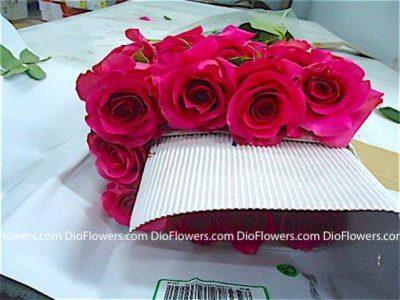 Красивые уфа где купить цветы дешево екатеринбург цветы казани курьерская