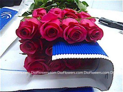 Цветы оптом из Эквадора Голландии по всей России