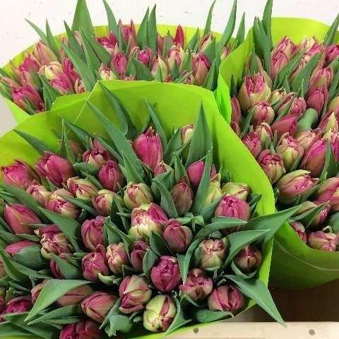 Цветы в Голландии