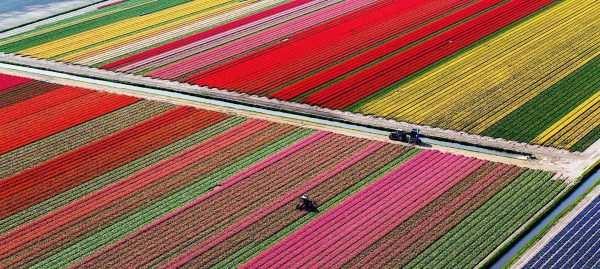 Цветы оптом из Голландии без посредников