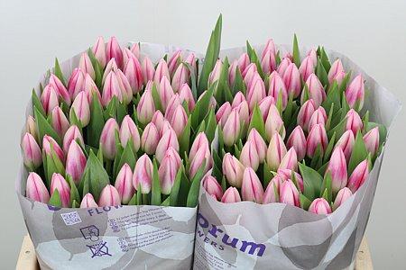 Цветы оптом на 8 марта