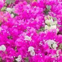 Цветущие