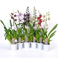 Орхидеи от садовника