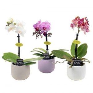 Горшечные растения оптом